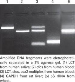 DNAzol® Direct (DN 131)